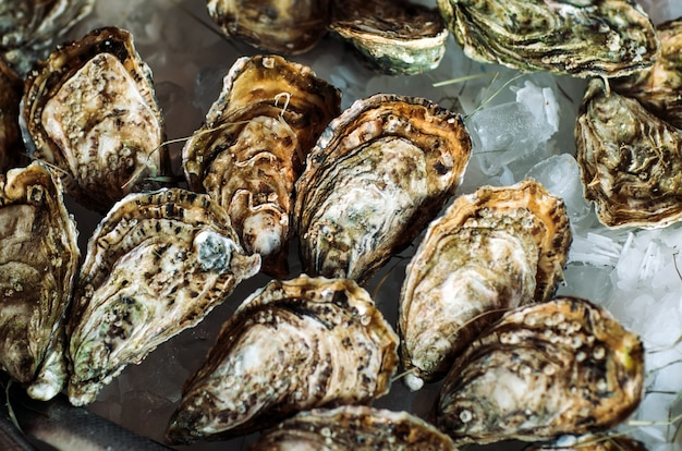 Huîtres et autres fruits de mer sur glace.