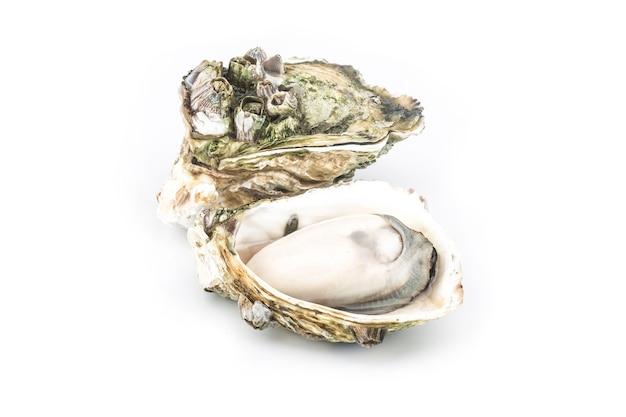 Les huîtres cuites à la vapeur sont placées sur le dos blanc