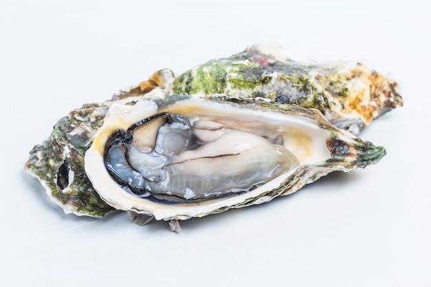 Huîtres sur un fond blanc