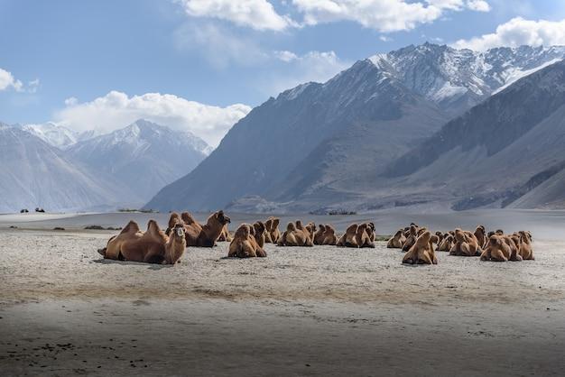 Hunder sand dunes avec lumière du jour et ciel dégagé