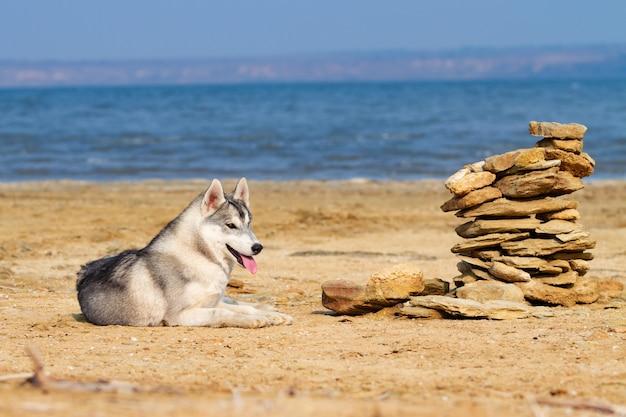 Huskies de sibérie sur une plage