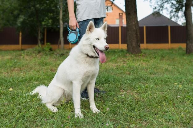 Husky blanc avec son propriétaire
