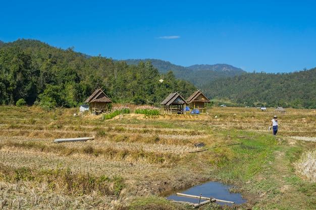 Hutte de bois dans la campagne de rizière à pai, thaïlande