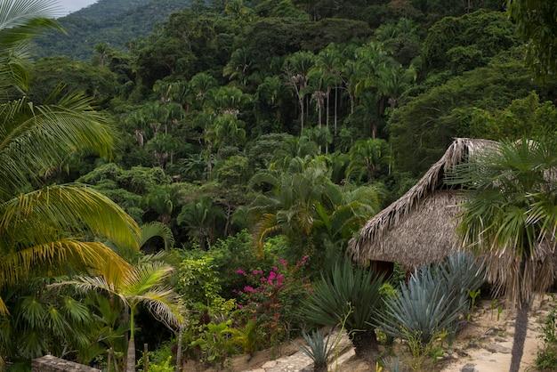 Hutte de chaume dans la forêt tropicale, yelapa, jalisco, mexique