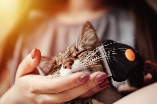Hygiène, toilettage d'animaux domestiques, peignage de la laine de chat, soin du pelage