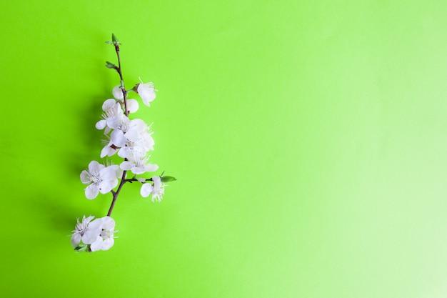 Idée créative de printemps, fond