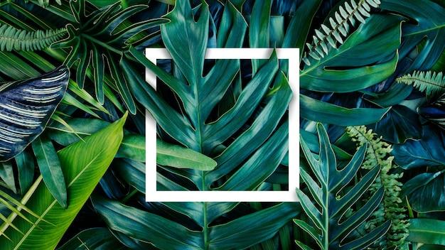 Idée nature et disposition créative de feuilles de cadre carré blanc et feuille verte tropicale mise à plat