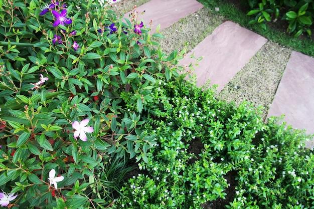 Idée de pierre et de carreaux de ciment pour les allées de pavage dans le jardin. jardin design et décoratif.