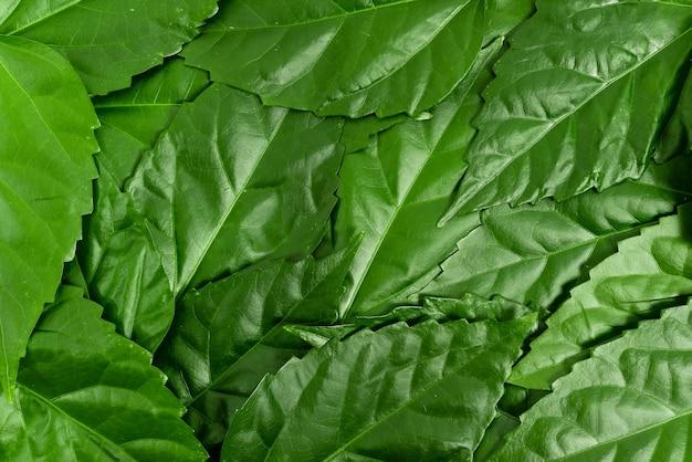 Idées de conservation de la nature rédaction de plans de préservation de l'environnement matériaux organiques jardinage