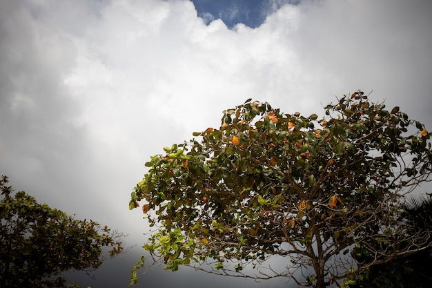 Il va pleuvoir le ciel est couvert d'orages sombres avant la pluie au premier plan