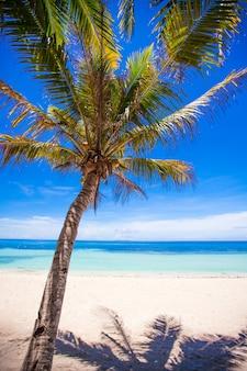 Île déserte avec palmier sur la plage