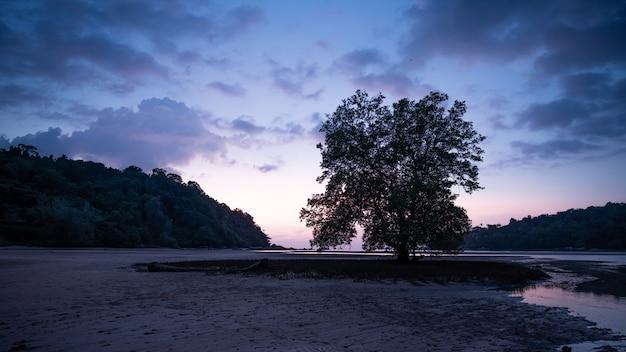 Île de la mer tropicale dans la soirée