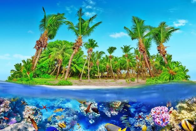 Île tropicale dans l'atoll de l'océan tropical et monde sous-marin merveilleux et magnifique avec coraux et poissons tropicaux.