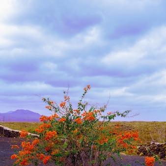Les îles canaries. nature canarienne. paysage. art conceptuel de voyage