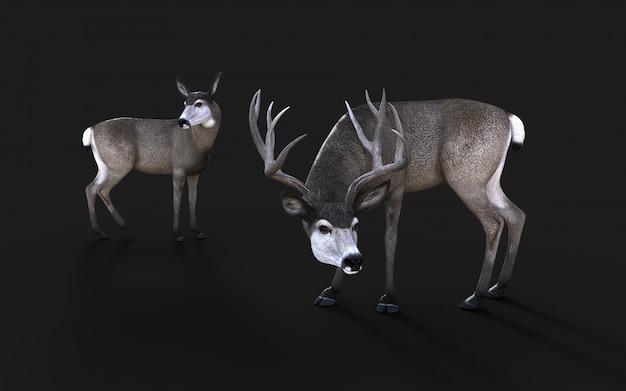 Illustration 3d de la faune de cerf mulet dans l'ouest américain isoler sur fond noir avec un tracé de détourage