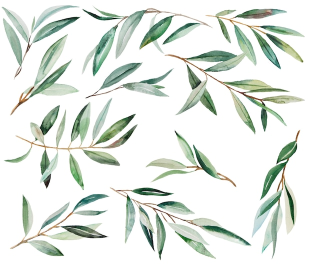 Illustration aquarelle de branche d'olivier vert