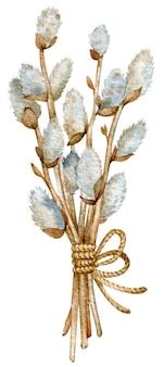 Illustration aquarelle de branches de saule chatte isolées