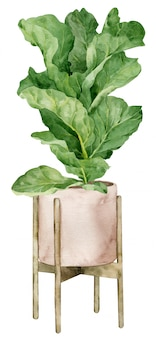 Illustration aquarelle de figuier feuille de violon dans le planteur isolé. décoration d'intérieur. design d'intérieur boho.