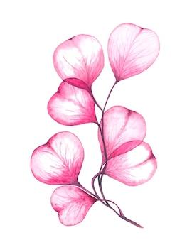 Illustration aquarelle florale de branches d'eucalyptus