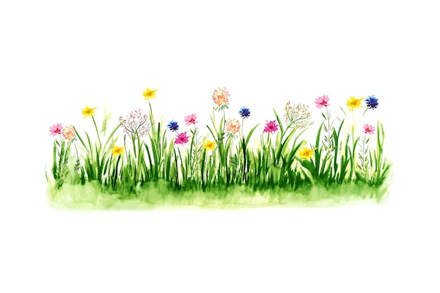Illustration aquarelle d'herbe verte.