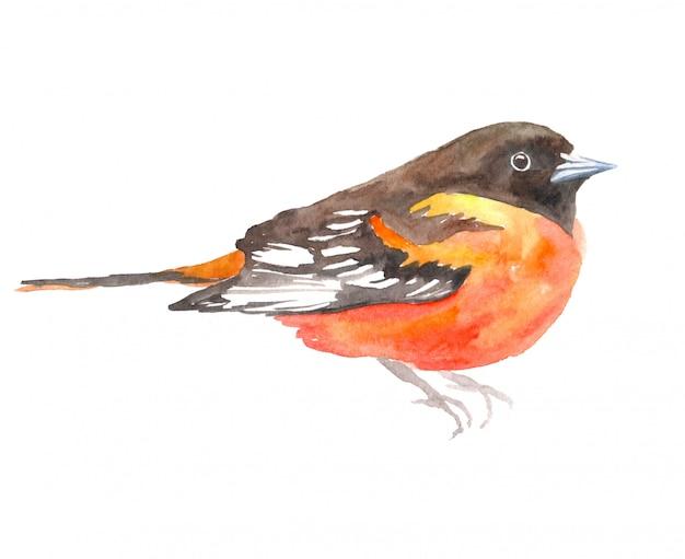 Illustration aquarelle avec oiseau.