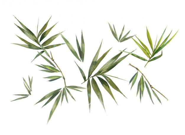 Illustration aquarelle peinture de feuilles de bambou, sur fond blanc