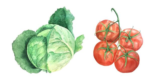 Illustration botanique vintage de chou aquarelle et tomate isolée