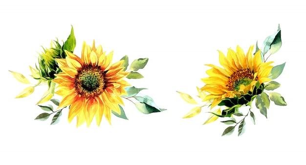 Illustration de bouquets de tournesol aquarelle.
