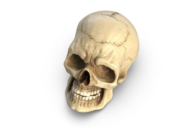 D illustration du crâne humain isolé sur blanc