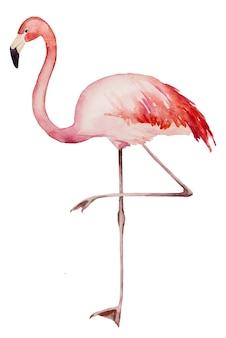 Illustration isolée d'oiseaux exotiques pour la papeterie de mariage, les salutations, le papier peint, la mode, les affiches