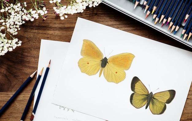 Illustration d'un papillon à colorier