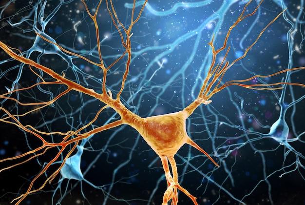 Illustration de la structure des neurones du cerveau