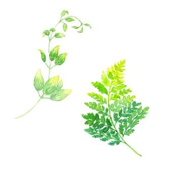 Illustrations à l'aquarelle peintes à la main de fougère à feuilles de cuir et de stemona japonica