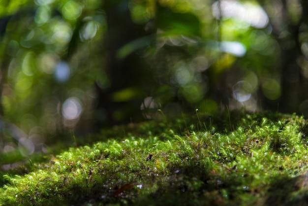 L'image d'abondantes ressources naturelles. dong phaya yen, site du patrimoine mondial
