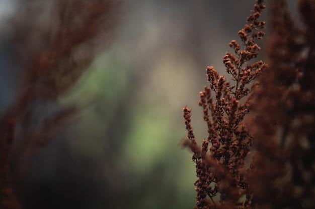 Image d'arrière-plan close-up plantes séchées