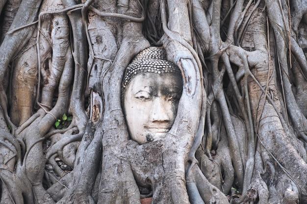 Image de bouddha dans une racine d'arbre bodhi