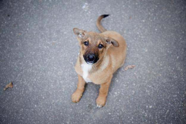 Image avec un chien dans la rue