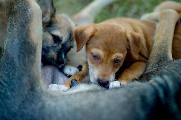 L'image d'un chiot en train de manger du lait maternel de la faim concept d'amoureux des chiens avec espace de copie