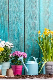 Image de chrysanthèmes colorés dans des pots près d'une clôture en bois