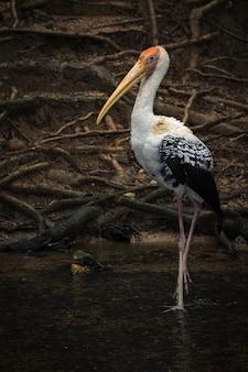 Image de cigogne peinte sur la nature. animaux sauvages.