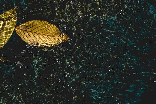 L'image de feuilles jaunes sous l'eau qui coule à travers natural concept avec espace de copie