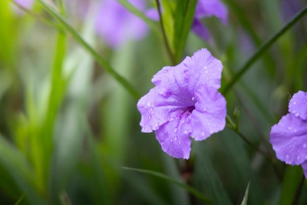 L'image des fleurs colorées