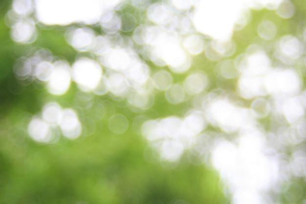 Image floue d'arbres dans le parc d'été .arrière-plan avec copie - espace.