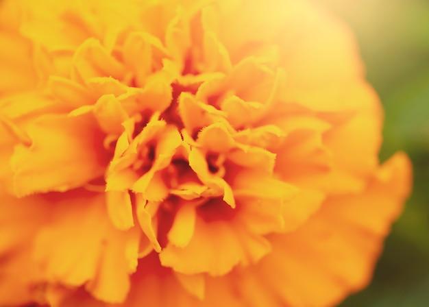 Image floue de belle orange vif plus bas en été, concept botanique.