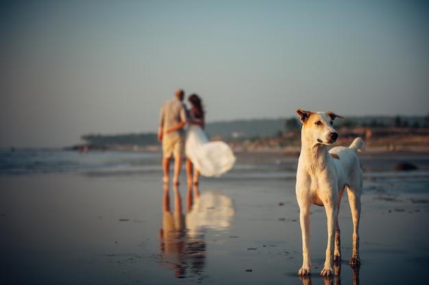 Image floue de couple heureux marchant sur la plage. au premier plan, un chien se tient sur le sable. l'homme et la femme dans une étreinte sont enlevés le long du bord de mer. concept de vacances