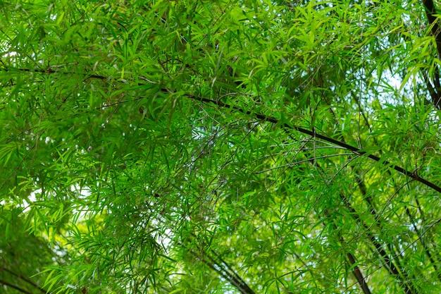 Image floue de la forêt de bambous