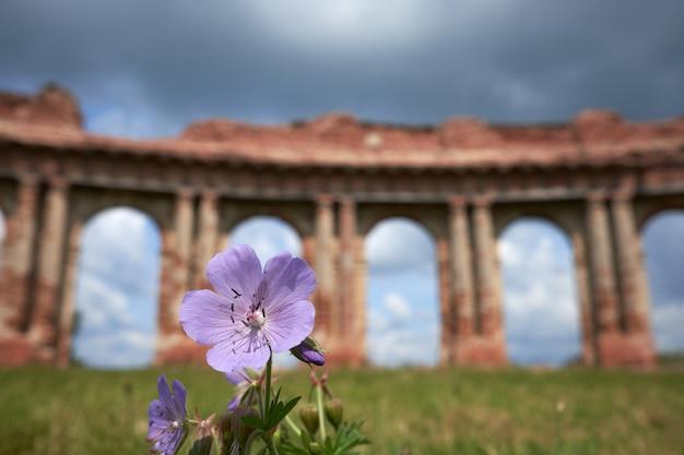 Image floue des ruines antiques sur fond de fleurs d'été pourpre