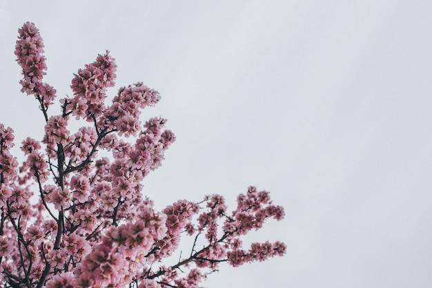 Image de fond avec des branches en fleurs