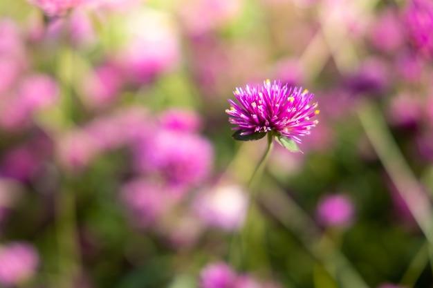 L'image de fond des fleurs colorées, nature de fond