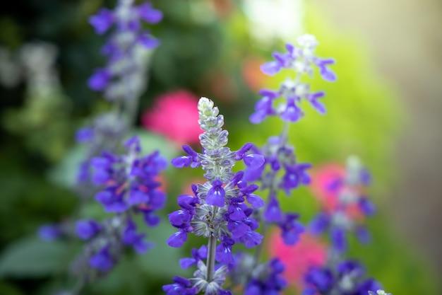 L'image de fond des fleurs colorées